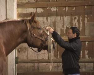 CoachingmitPferden01