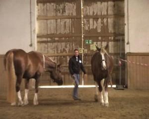 CoachingmitPferden02
