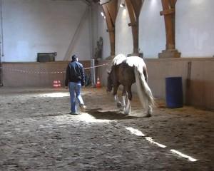 CoachingmitPferden03